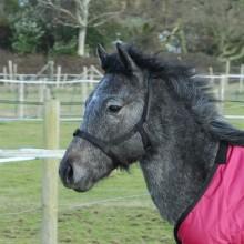 Rhinegold (metal free) Field Safe Foal Headcollar